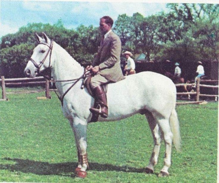 Les 2174 meilleures images du tableau horses are the best for Dujardin grange