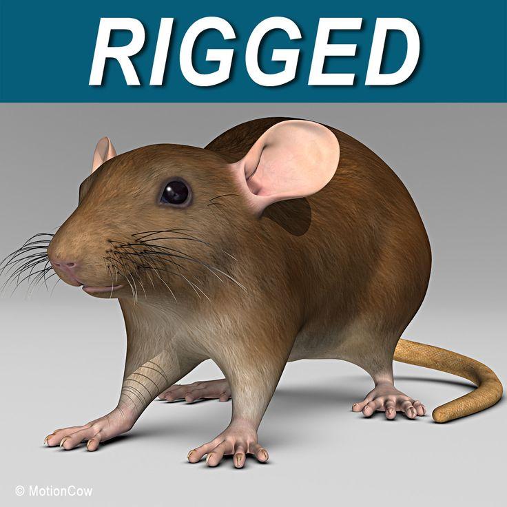 3D Brown Rat Model - 3D Model