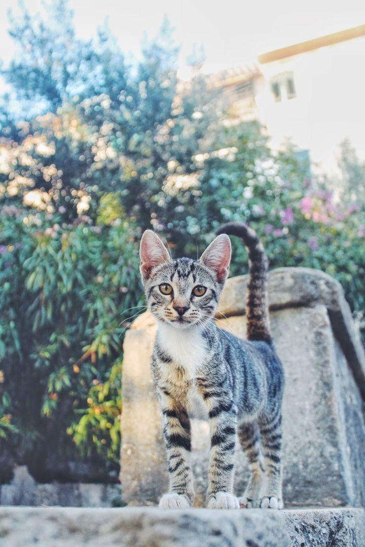 #travel #croatia #europe #split #cats #canon #travelwtihme http://fashionablestreets.blogspot.de/2016/08/travelwithme-to-croatia-discover-split.html