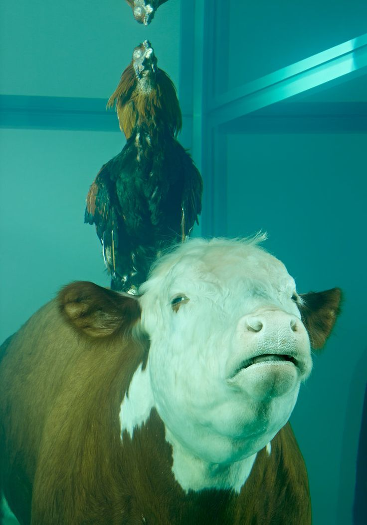 Damien Hirst - Cock and Bull, 2012