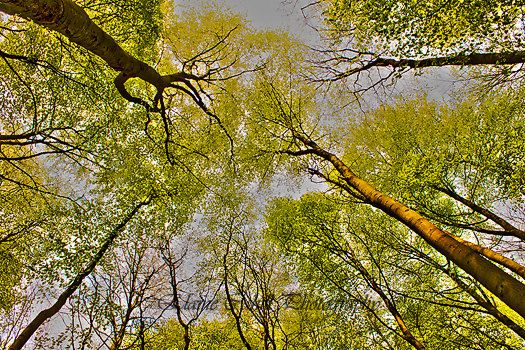 Trees. by peridotphotography on Etsy, €30.00
