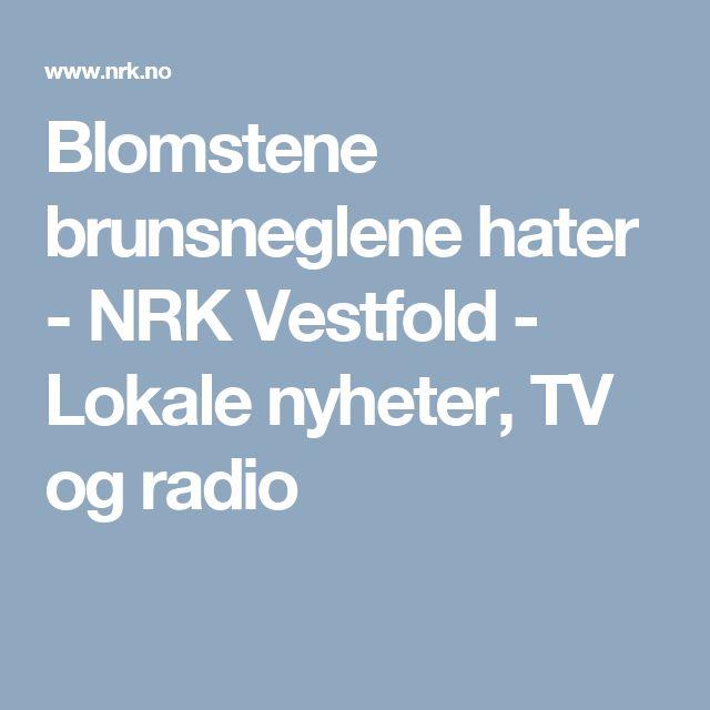 Blomstene brunsneglene hater - NRK Vestfold - Lokale nyheter, TV og radio