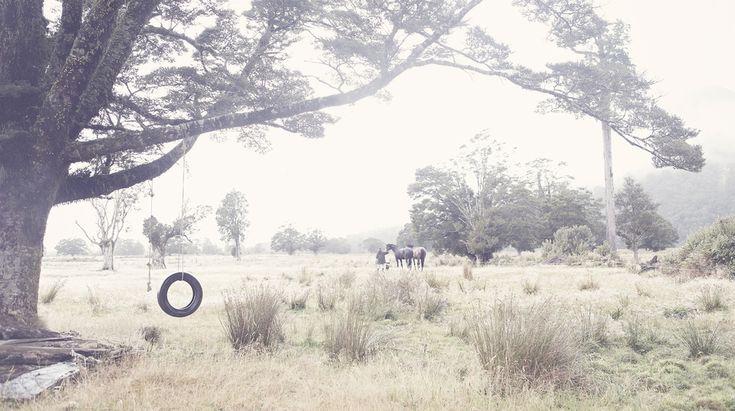 Bringing 'em in, tyre swing, horses, west coast, Our land, Dan Max, NZ art