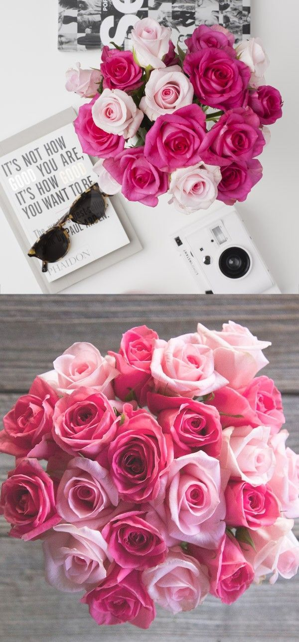 302 best Roses images on Pinterest | Beautiful flowers, Flower ...