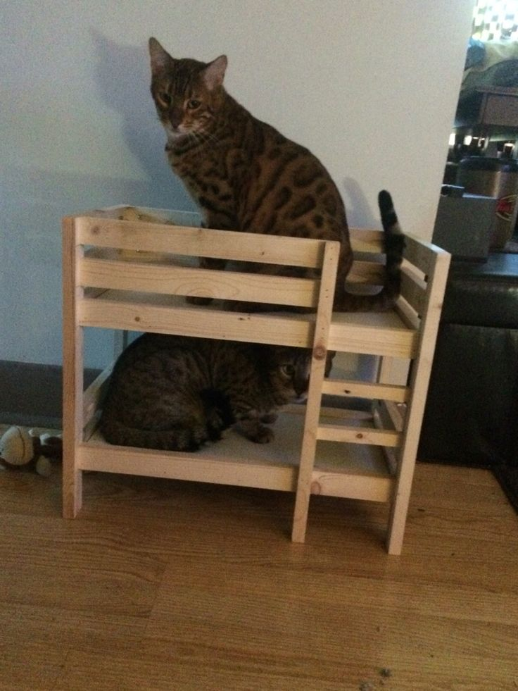 Taz and Spaz checking out the doll bunk bed I made.   Need to make one a little bigger for them