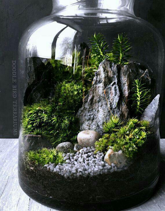 Les 125 meilleures images du tableau terrarium plantes sur for Plantes sur internet