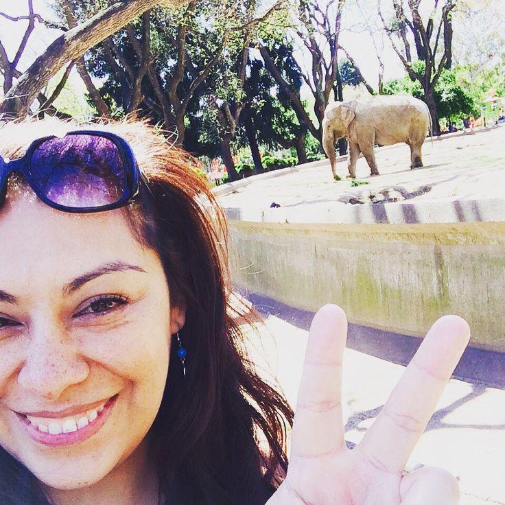 Visitando al elefante en Buenos Aires