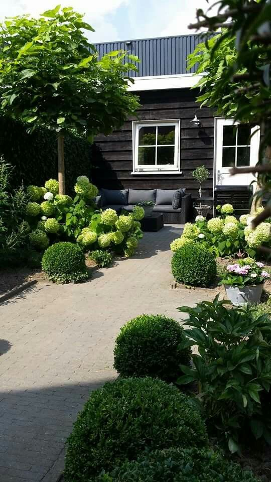 Topiary box balls combined with other rounded shapes of the Hydrangea & Peony flowers & Catalpa trees