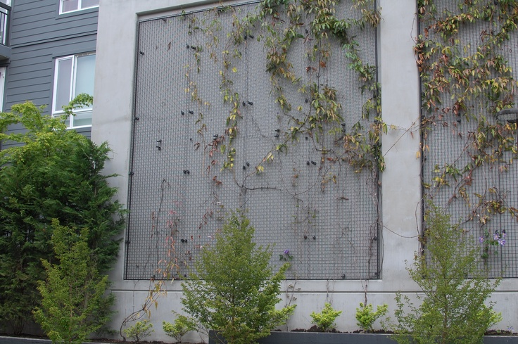 vertical growing wall structure