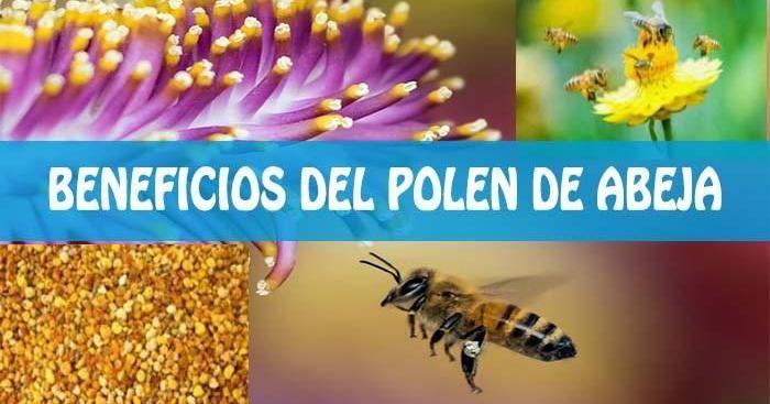 El polen tiene casi todos los nutrientes requeridos para que el cuerpo se encuentre saludable. Te contamos sus beneficios aquí