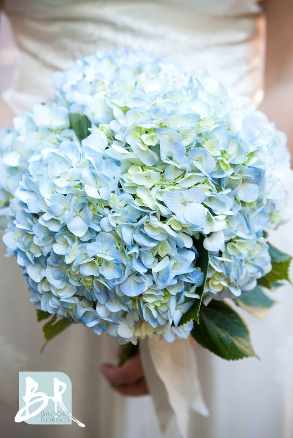 Hydrangea's so simple and unique!