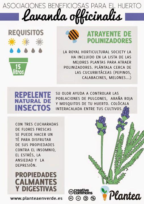 Plantas medicinales, propiedades, usos ... - Comunidad - Google+