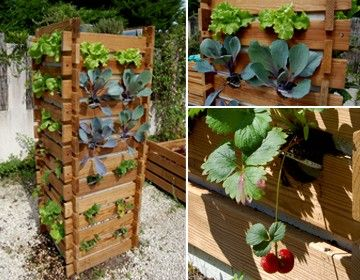 10 images about culture du potager on pinterest colors minis and balconies. Black Bedroom Furniture Sets. Home Design Ideas