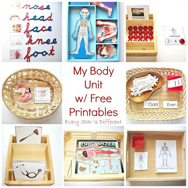 My Body Unit w/ Free Printables (Learn & Play Link Up) – Montessori Biology Activities
