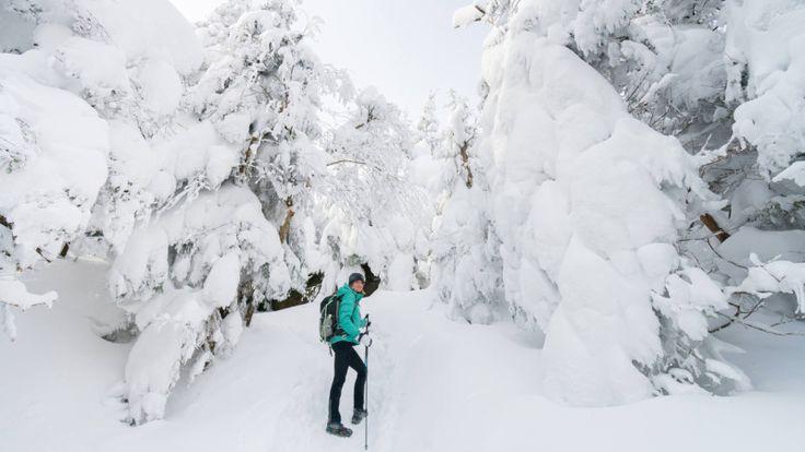 Randonnée à Sutton parmi les fantômes de neige | Espaces