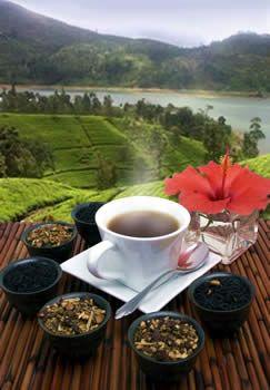 Cinnamon Orange - 1lb. Loose Leaf Tea  its the best