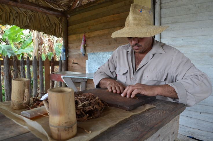 tobacco farmer. showing us have to make a cigar