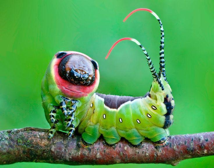 гусеницы танцуют