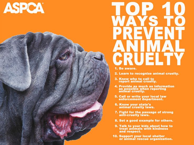 stop animal cruelty http://on.fb.me/LHKq17Dogs, Cruelty Awareness, Voice, Tops 10, Animal Welfare, Animal Abuse, Aspca, Stop Animal Cruelty, Prevention Animal
