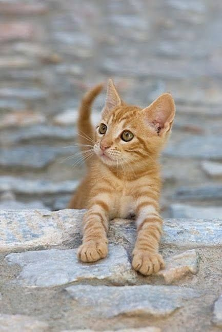 """""""In my world, the grass is green, the sky is blue, and all cats are orange."""" --Jim Davis"""