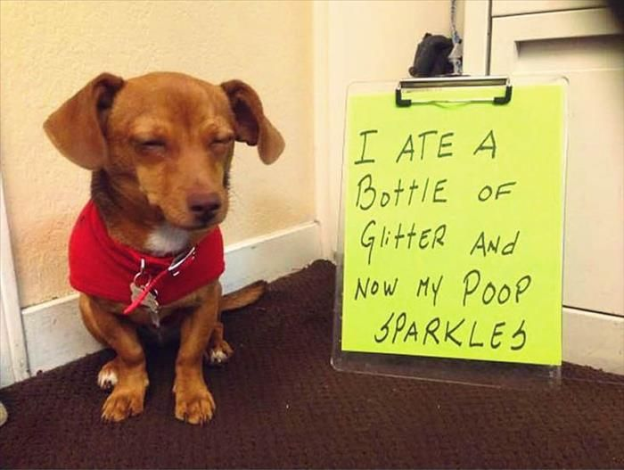 Shameful Dogs Are Hilarious When They Arent Yours  16 Pics
