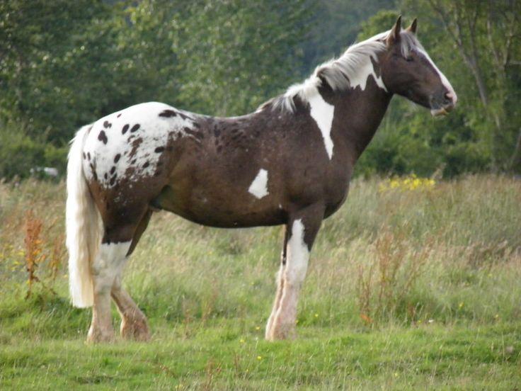 all the pretty horse essay