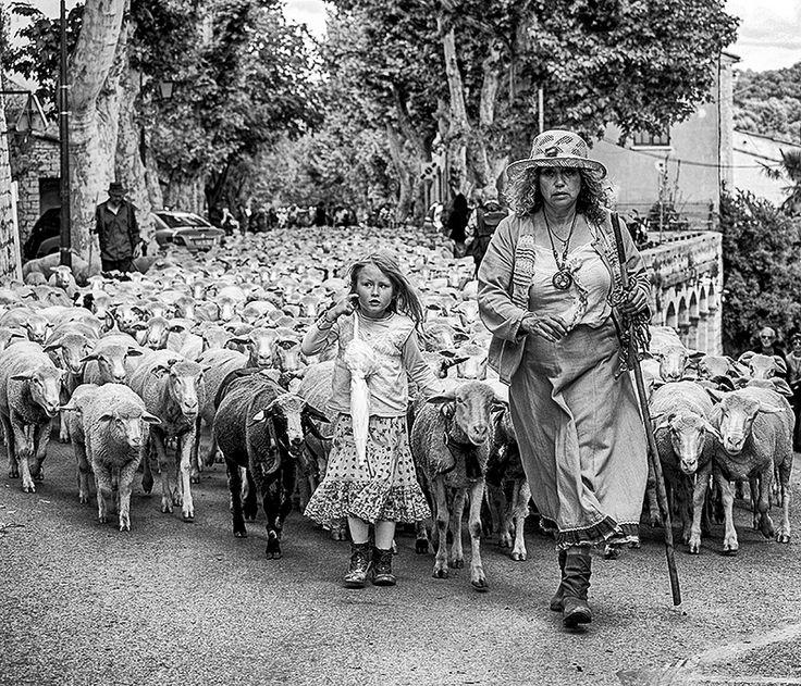 Seasonal move to summer pastures. Éguilles, Provence-Alpes-Cote d'Azur, France