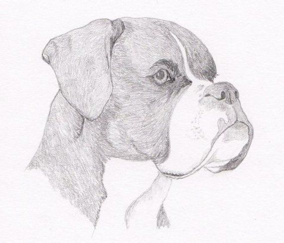 10 Mesmerising Drawing Flowers Mandala Ideas En 2020 Perros Dibujos A Lapiz Dibujos Faciles De Perros Como Dibujar Un Perro