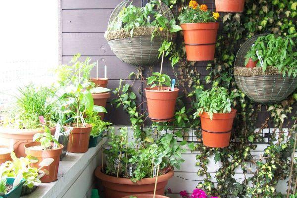 Idei de afaceri în spații mici: 7 plante medicinale care pot fi cultivate în ghiveci