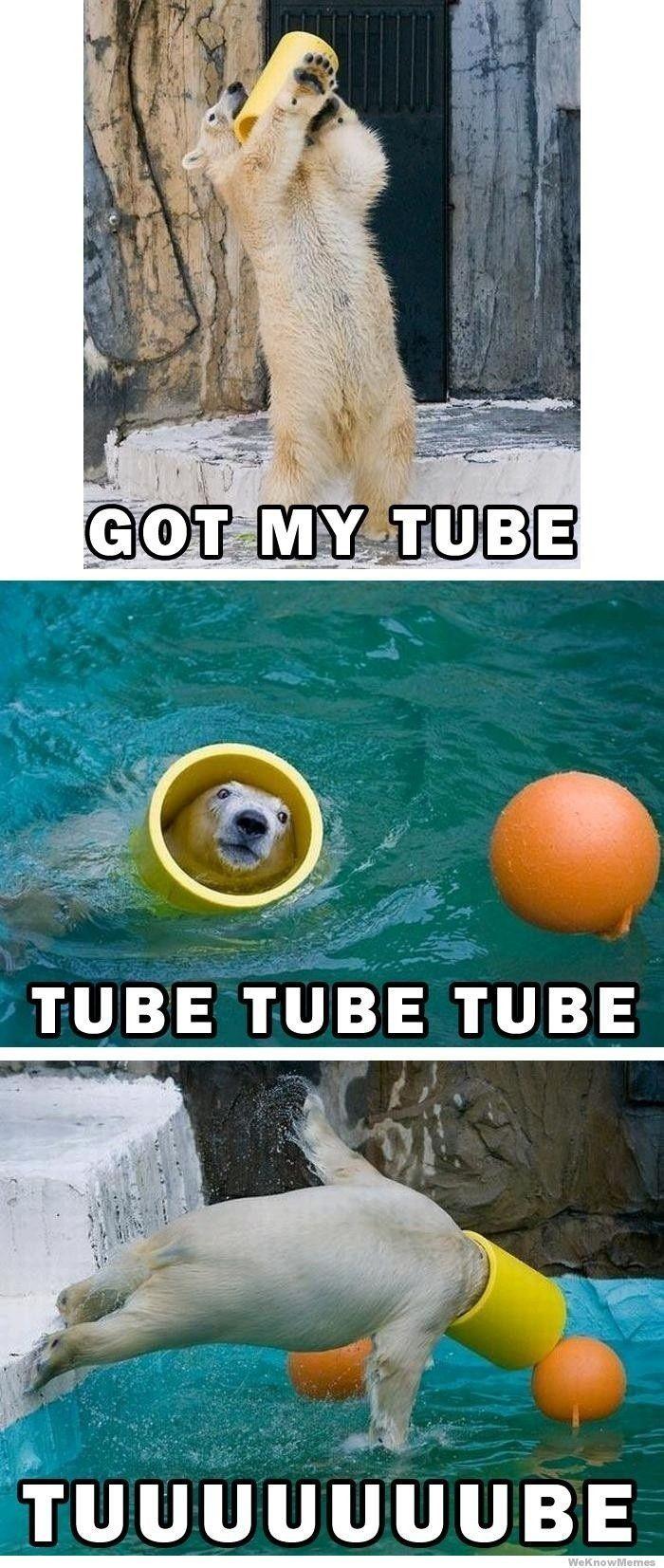 got-my-tube-polar-bear