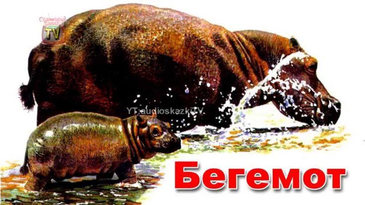 Энциклопедия для детей. Буква Б. Бегемот.