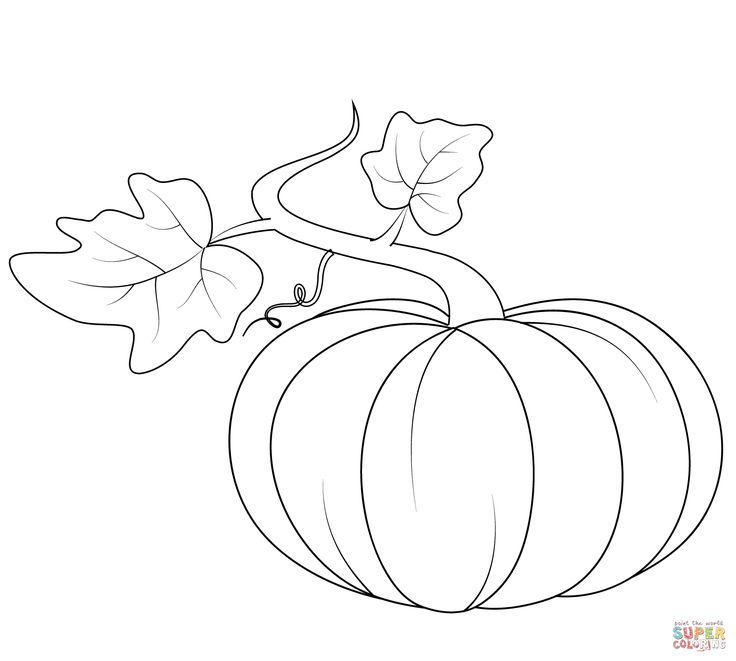 62 best autumn draw images on pinterest fall leaves and for Pumpkin leaves coloring pages