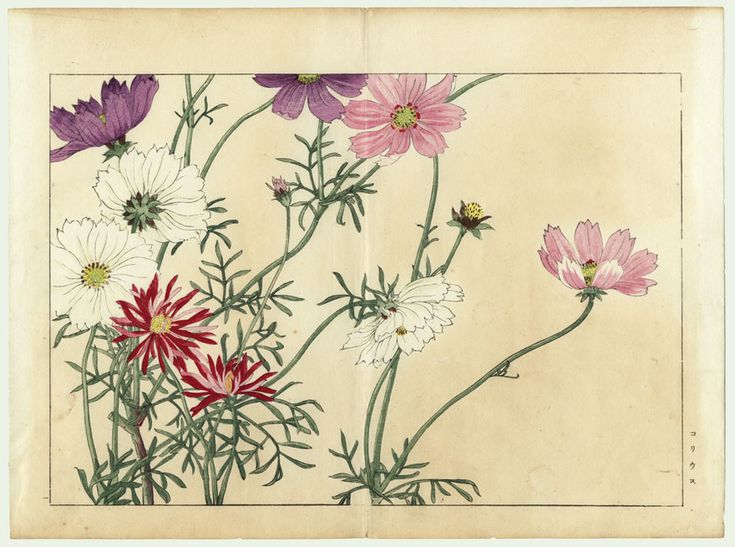 original tanigami konan  1879