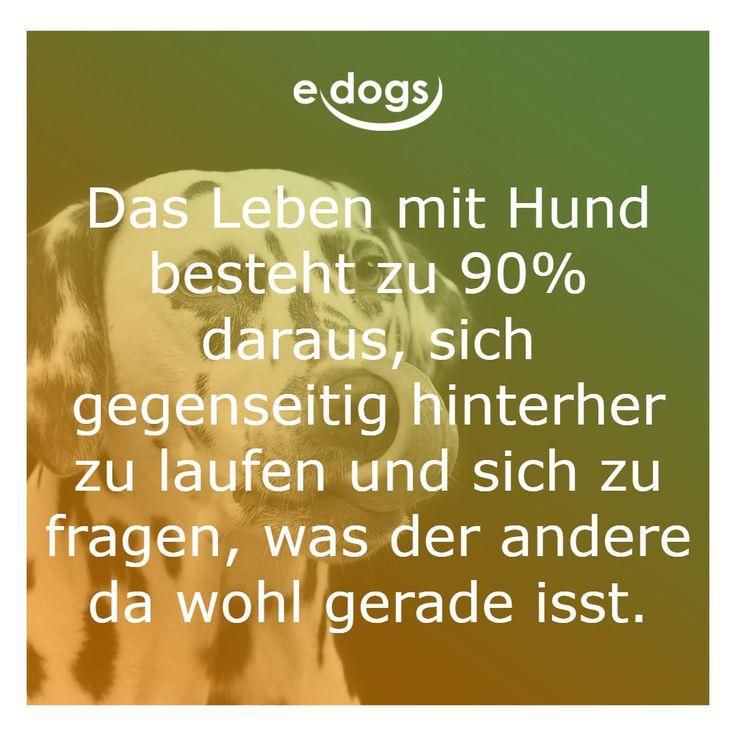 Dog love – Me and my dog