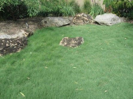 uc verde buffalo grass - water 1/week or less - mow every 2-3 weeks up to 1/year