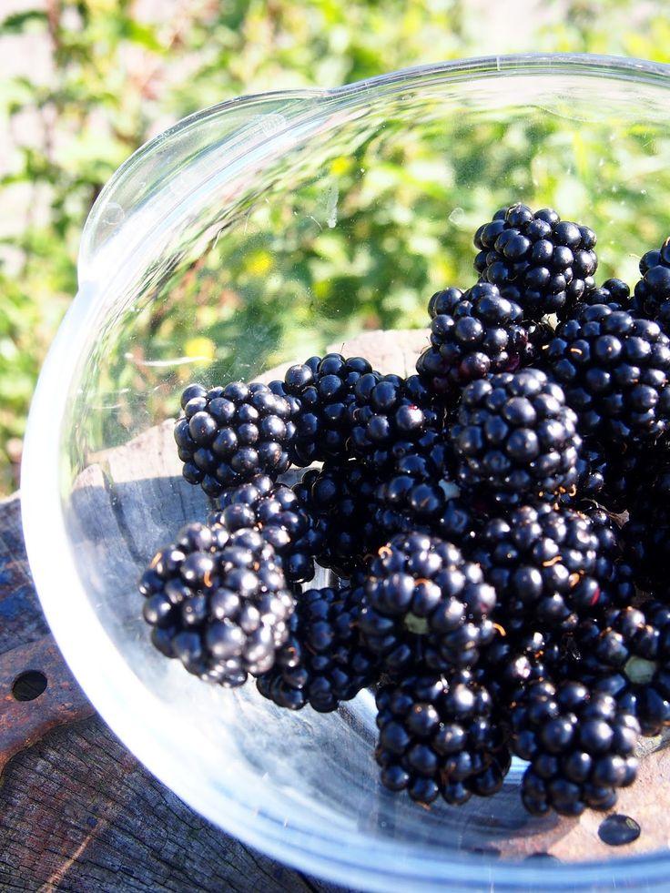 Całkiem zdrowo | Na blogu odpowiadam na pytanie: dlaczego powinniśmy jeść jeżyny?