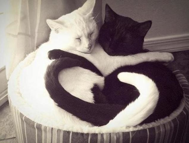 Cats with heart.
