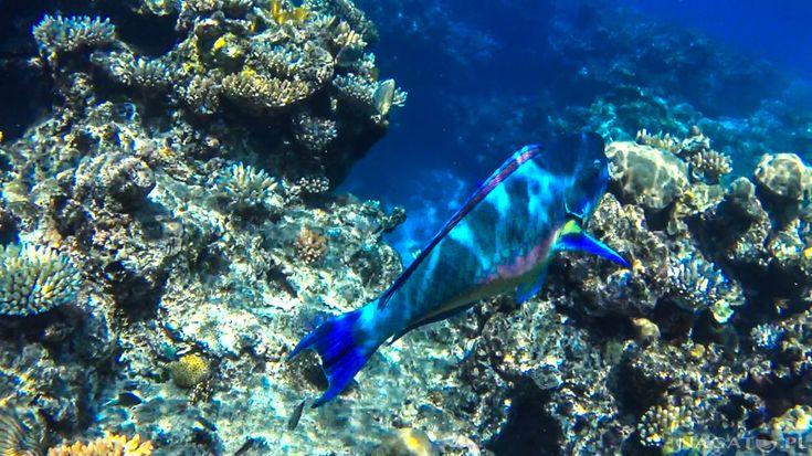 Nagato w Australii - Wielka Rafa Koralowa - Joe Monster