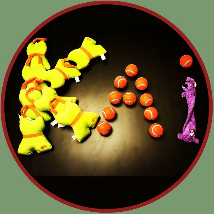 Kai Krates! Affordable monthly dog subscription box! Finally!! With toys and treats dogs will love! Kaikrates.com