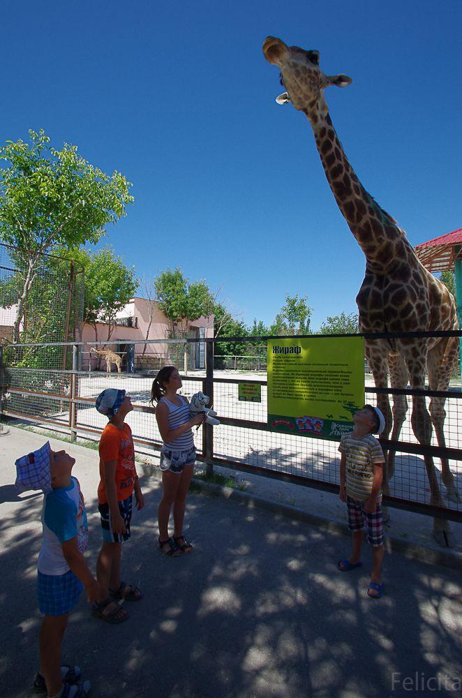 Жираф в Тайгане