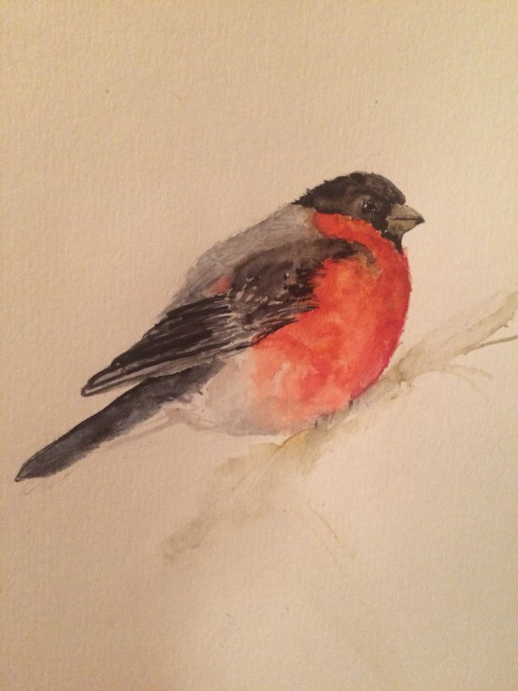 Bird bullfinch. Winter