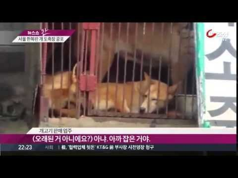 Mayor of Paris, France Anne Hidalgo: Tell Sister City, Seoul, South Korea, That We're Opposed to the Torture and Consumption of Dogs and Cats.   Paris has become Sister City with Seoul, South Korea, regardless of the fact that Seoul ignores horrendous dog and cat cruelty by allowing the illegal mass breeding, brutal slaughter and sale of these animals for its meat trade.  Seoul Metropolitan City is the largest dog meat consumption area in South Korea.  According to a recent report by Chosun…