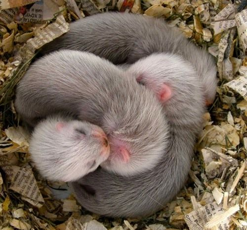 baby otters                                                                                                                                                                                 More