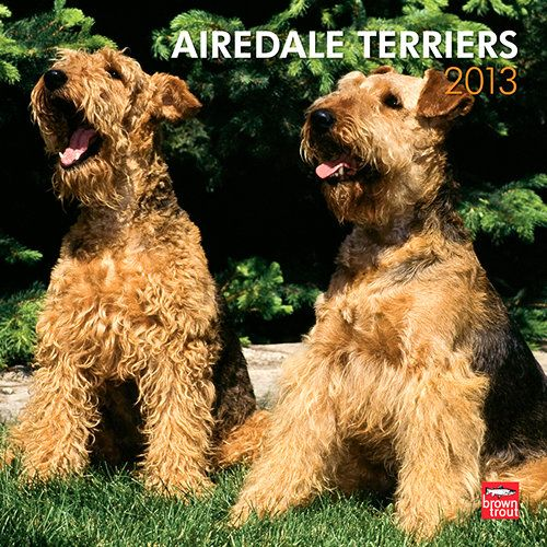 Airedale Terriers Wall Calendar: The largest breed of terriers, the Airedale was employed as one of the first police dogs in Germany and Great Britain. These terriers are born hunters. They love to chase vermin on dry land and in the water.  $14.99  http://calendars.com/Airedale-Terriers/Airedale-Terriers-2013-Wall-Calendar/prod201300004956/?categoryId=cat10095=cat10095#