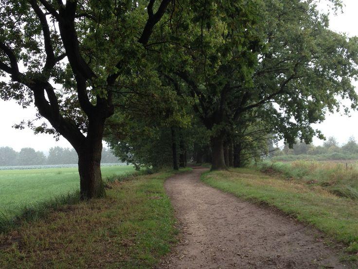 Zomaar een pad....