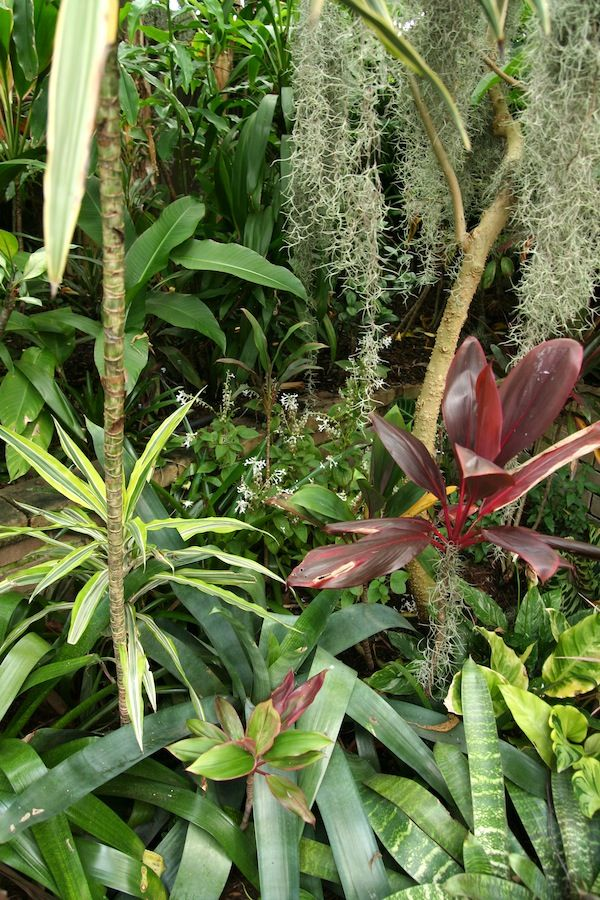 78 best images about tropical gardens in temperate for Tropical garden designs australia