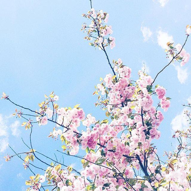 --- #flowers #fleurs #arbre #paris #lovenature #pink #arbreenfleurs #spring #springiscoming #petals #blooming #nature #minimal #blossoms #inbloom #flowerporn #primavera #campagne #igers_reims #igers_aube #ig_france #olympus #jjcomunity #focus #wildflowers #tbt