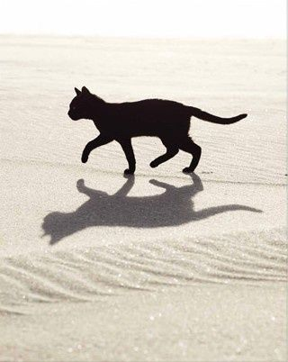 Black cats. Always been my favorite cats for some weird reason.                                                                                                                                                                                 More
