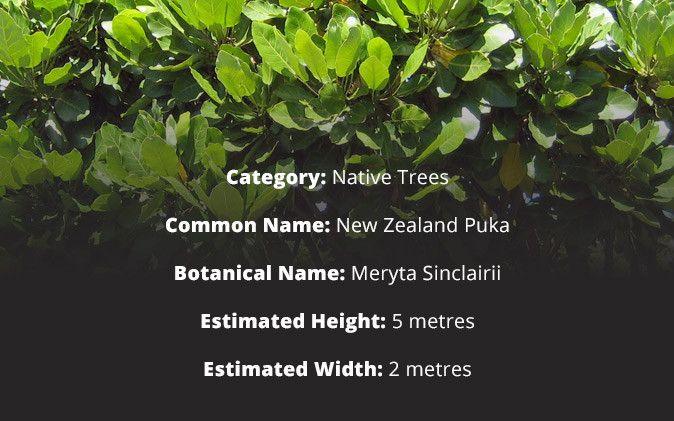 Waitaia Nursery - Coromandel Nursery