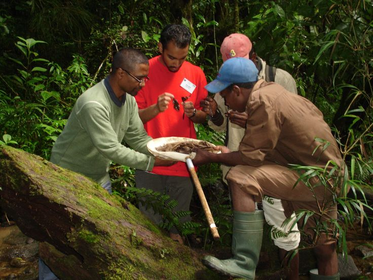 Sampling for macroinvertebrates in the Namorana River in Ranomafana National Park, Madagascar. These small animals can be used as an indicator of stream quality and habitat disturbance.